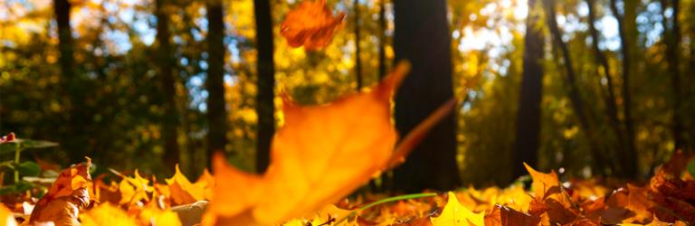 herfst dipje